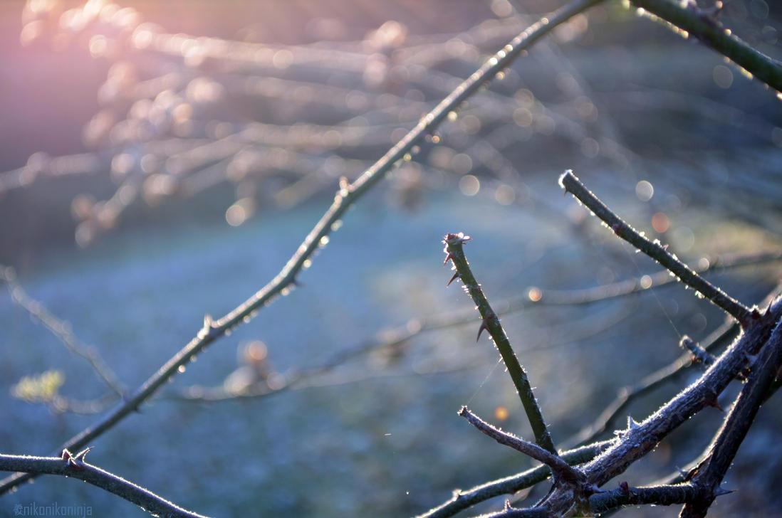 Good Morning, Thorns. by nikonikoninja