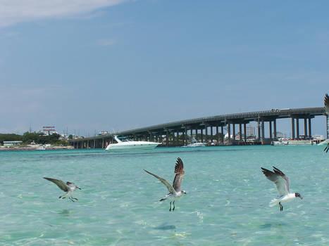 Seagulls Lineup