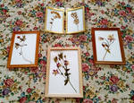 herbarium by Bezumets