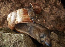dog-snail
