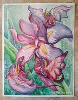 Aquarell iris dragons