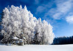 Winter is beautiful, but cold