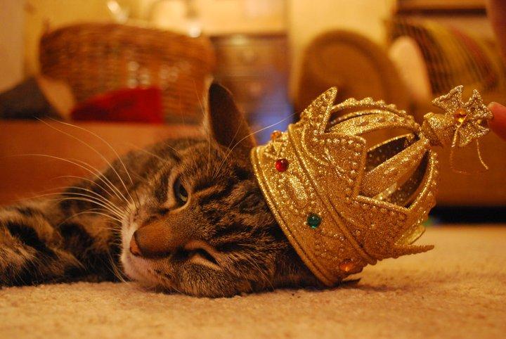 Queen Mewmew by Indigo-Yartsev