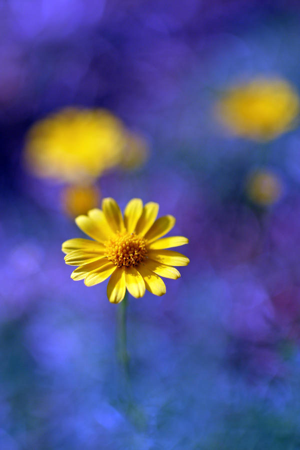 Wildflower Magic