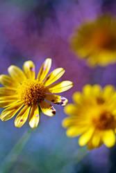 Wildflower Grace