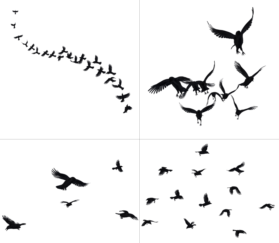 Crows In Flight PNG Stock by Roy3D