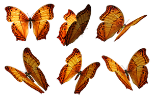 Butterflies PNG Stock by Roy3D