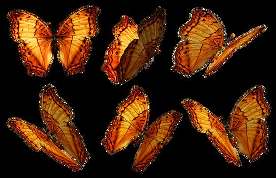 Butterflies PNG Stock