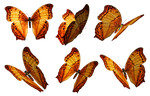 Butterflies PNG Stock