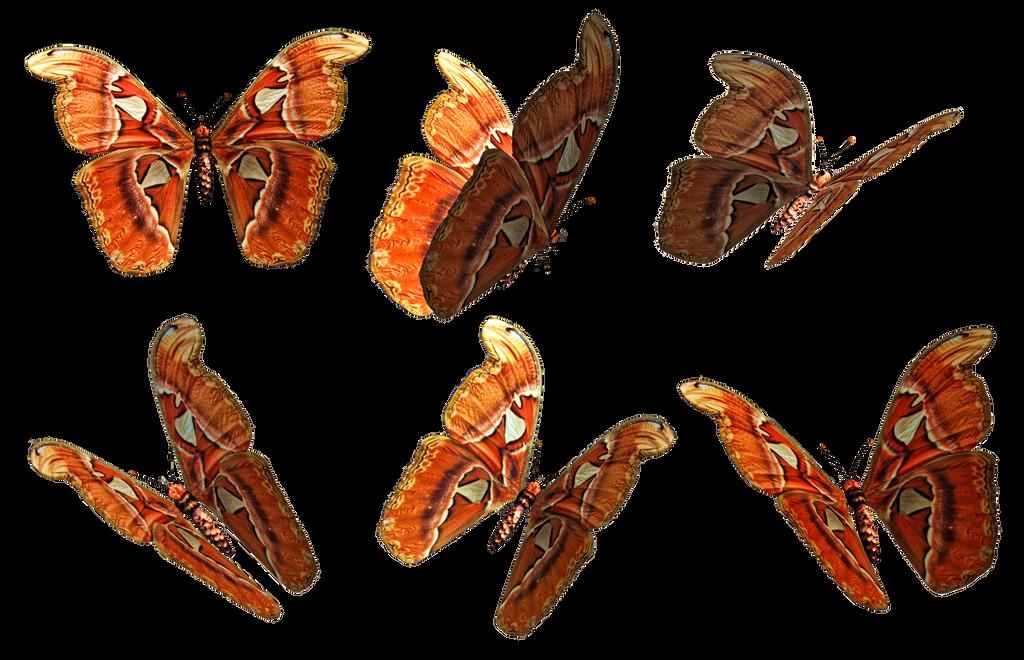 Butterflies 1 PNG Stock