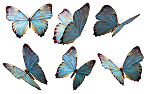 Butterflies 2 PNG Stock