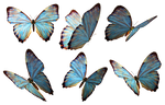 Butterflies 2 PNG Stock