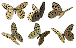 Butterflies 3 PNG Stock