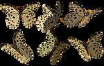 Butterflies 3 PNG Stock