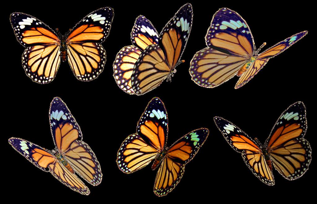 Butterflies 4 PNG Stock