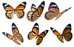 Butterflies 4 PNG Stock