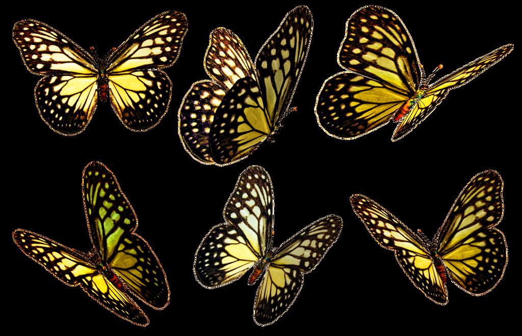 Butterflies 5 PNG Stock