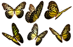Butterflies 5 PNG Stock