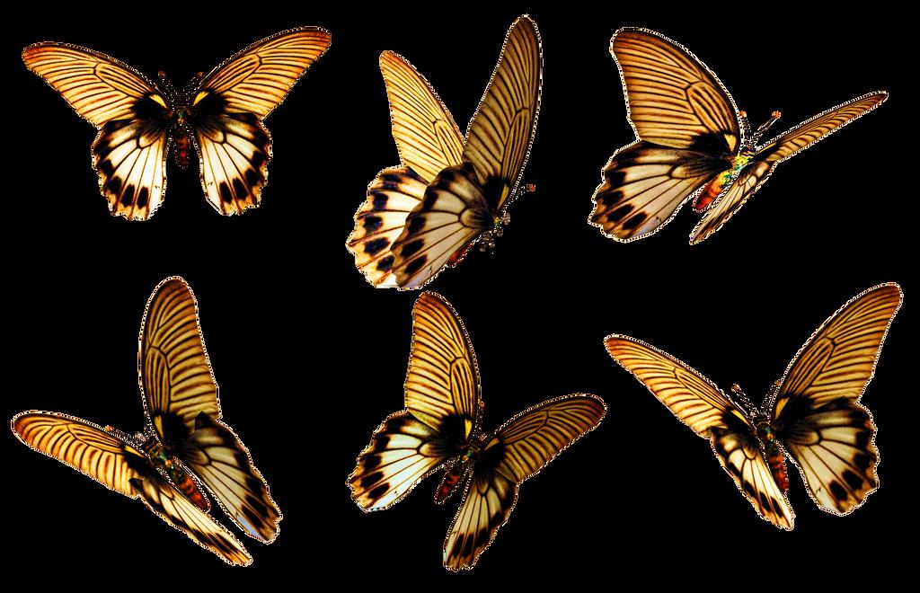 Butterflies 6 PNG Stock