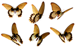 Butterflies 6 PNG Stock