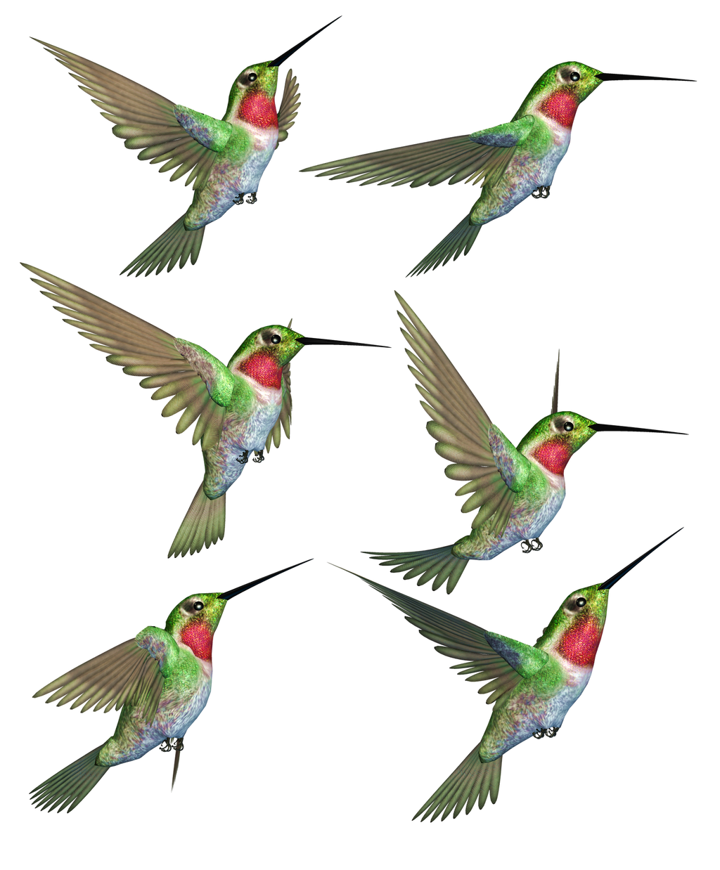 Humming Birds-1 PNG Stock