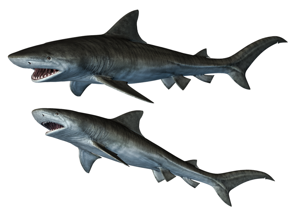 Sharks 1 Png Stock By Roy3d On Deviantart