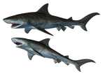 Sharks-1 PNG Stock