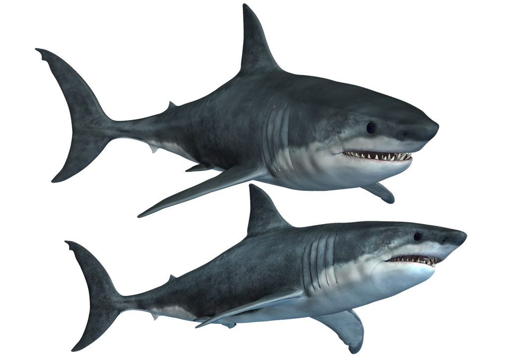 Sharks-2 PNG Stock by Roy3D on DeviantArt