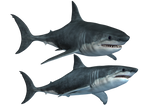 Sharks-2 PNG Stock