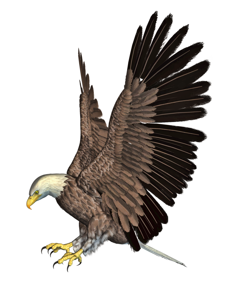 Eagle 02 PNG Stock by Roy3D on DeviantArt