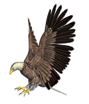 Eagle 02 PNG Stock