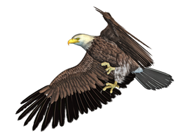 Eagle 04 PNG Stock by Roy3D