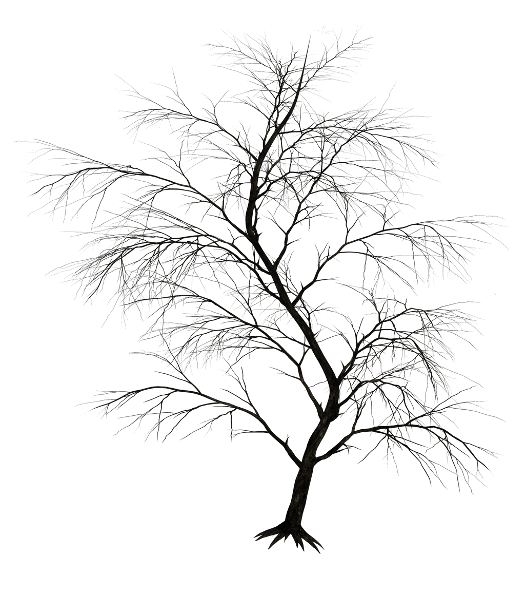 Dark Trees PNG Stock 01 by Roy3D