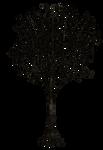 Dark Trees PNG Stock 03