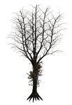 Dark Trees PNG Stock 04