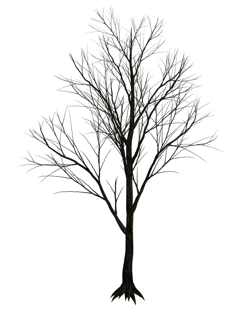 Dark Trees PNG Stock 07 by Roy3D