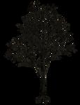 Dark Trees PNG Stock 07