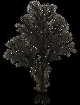 Dark Trees PNG Stock 08