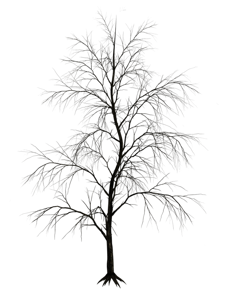 Dark Trees PNG Stock 09 by Roy3D