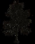 Dark Trees PNG Stock 09