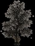Dark Trees PNG Stock 10