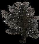 Dark Trees PNG Stock 02