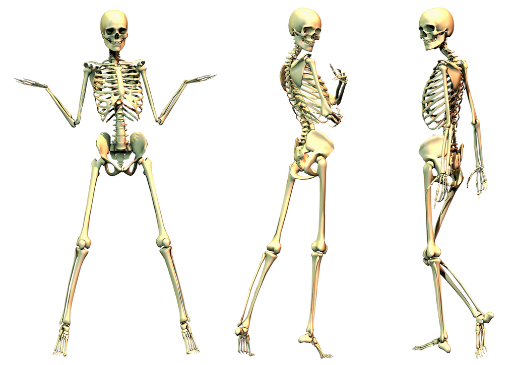 Spooky Skeleton 01 PNG Stock by Roy3D