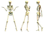 Spooky Skeleton 01 PNG Stock