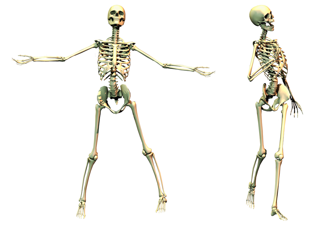 Spooky Skeleton 02 PNG Stock by Roy3D