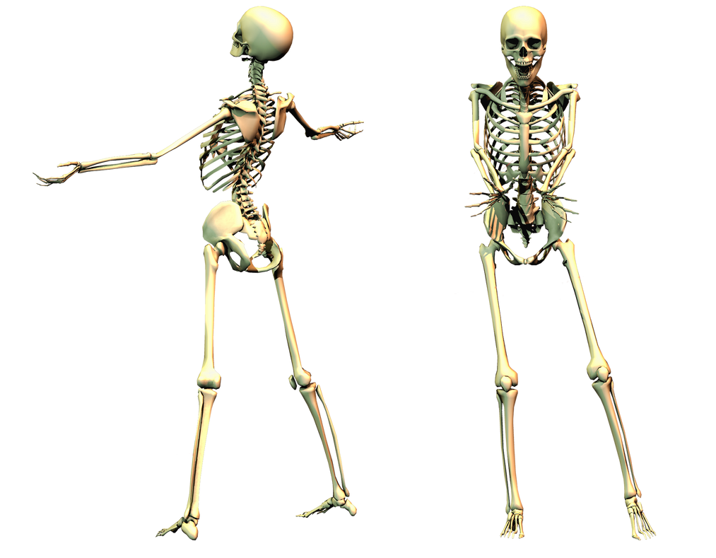 Showing Gallery For Spooky Skeleton Png