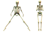 Spooky Skeleton 04 PNG Stock