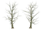 Bare Tree 01 PNG Stock