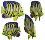 Angel Fish PNG Stock
