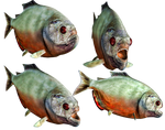 Piranah PNG Stock